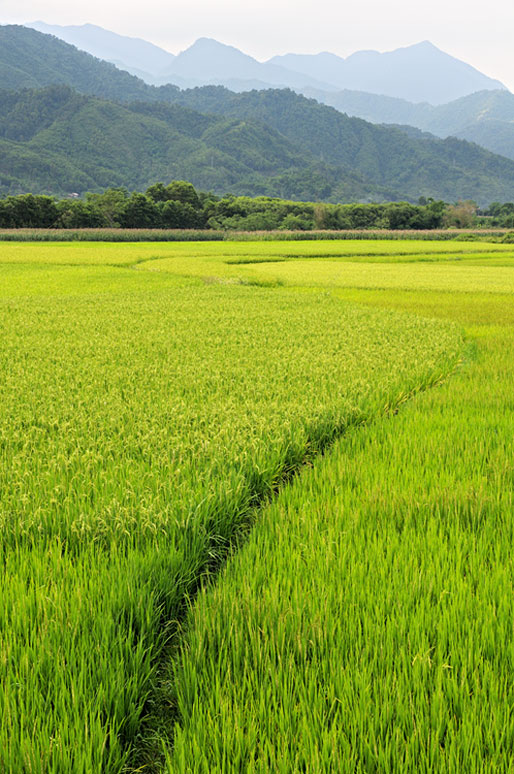 Montagnes et rizières au nord du Vietnam