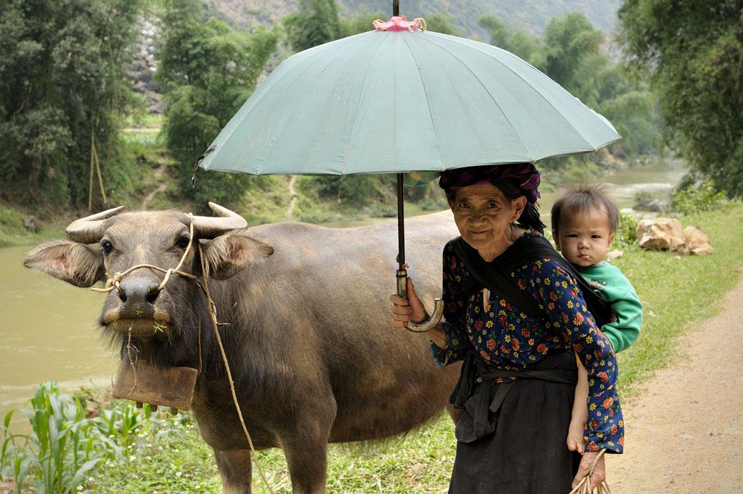 Buffle et grand-mère Hmong au nord du Vietnam