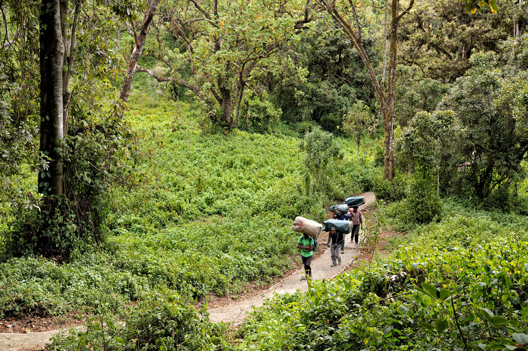 Porteurs dans la forêt tropicale sur le Kilimandjaro, Tanzanie