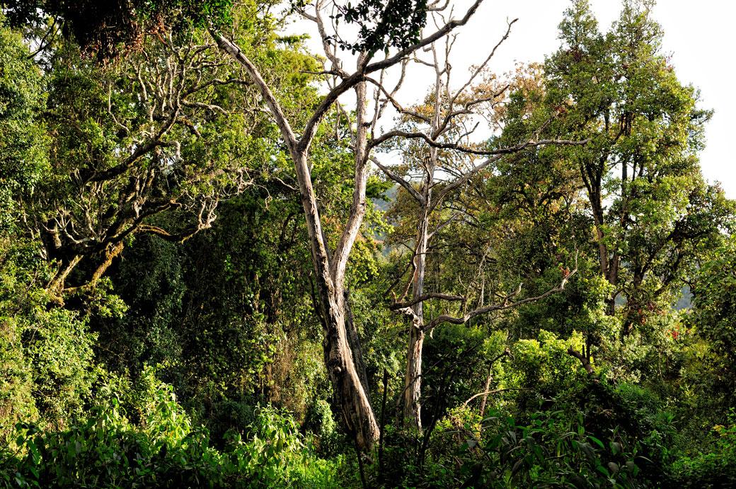 Forêt tropicale au camp Mti Mkubwa sur le Kilimandjaro, Tanzanie