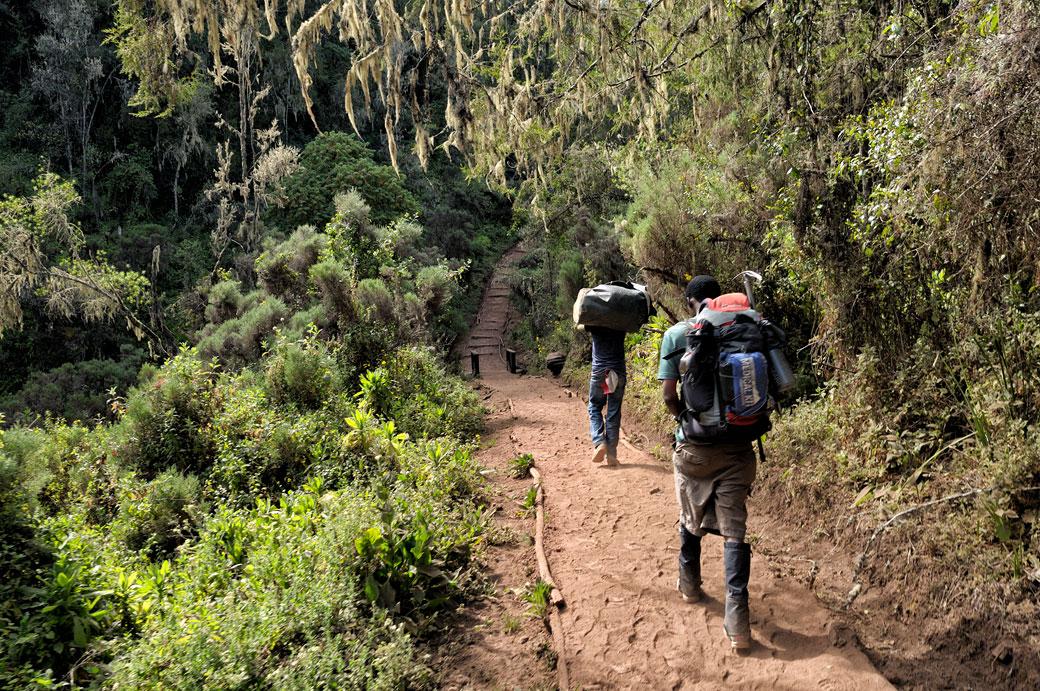 Guide et porteur dans la forêt de la voie Lemosho, Tanzanie