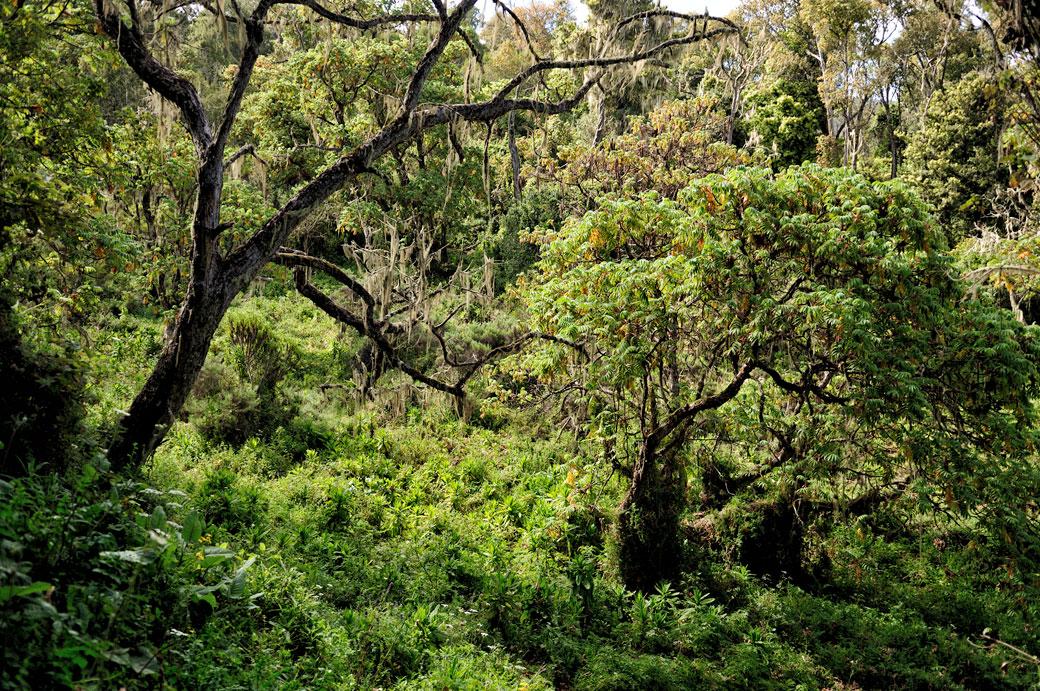 Forêt tropicale humide au bas du Kilimandjaro, Tanzanie