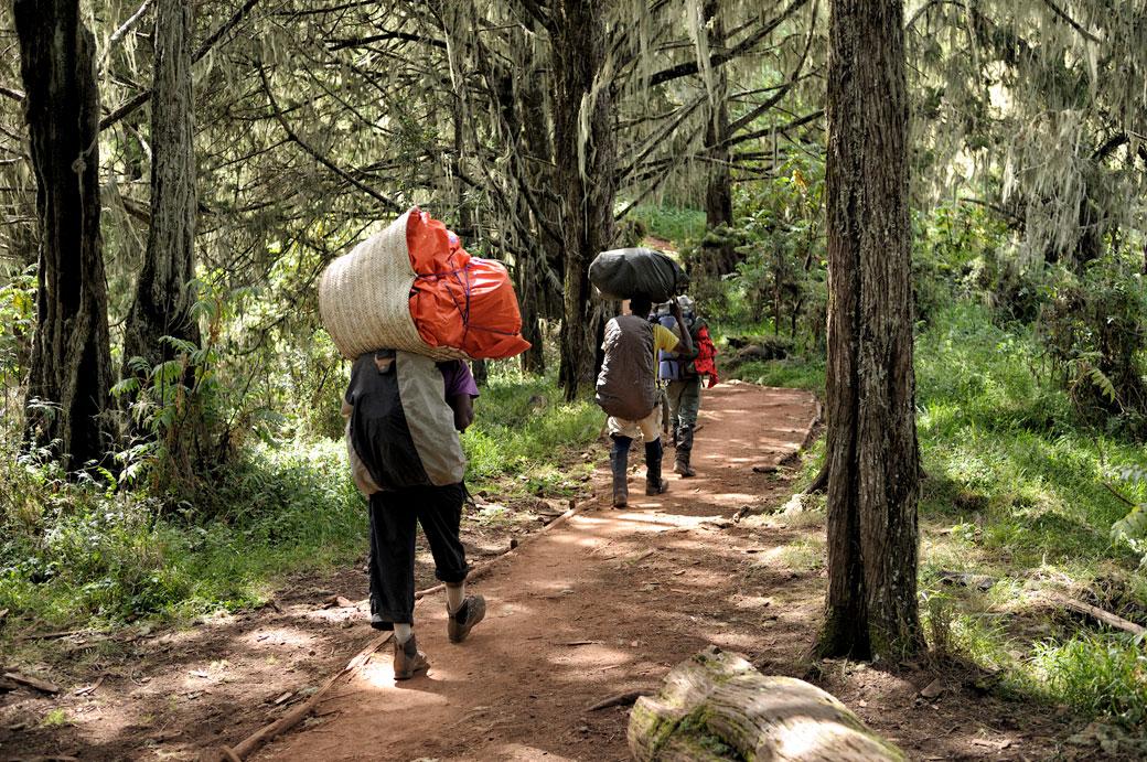 Porteurs dans la forêt humide du Kilimandjaro, Tanzanie
