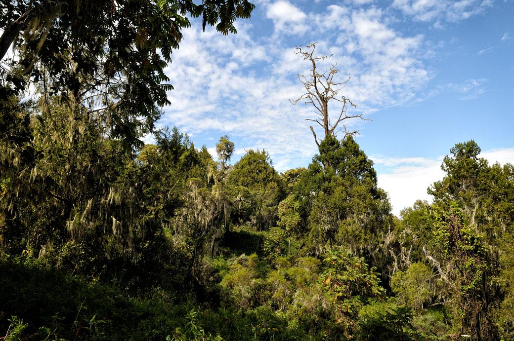 Ciel bleu et forêt du Kilimandjaro, Tanzanie