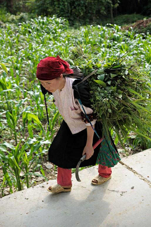 Jeune femme qui porte des herbes coupées, Vietnam