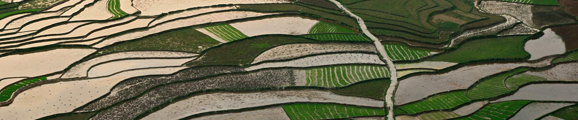 Top image rizières de Dong Van