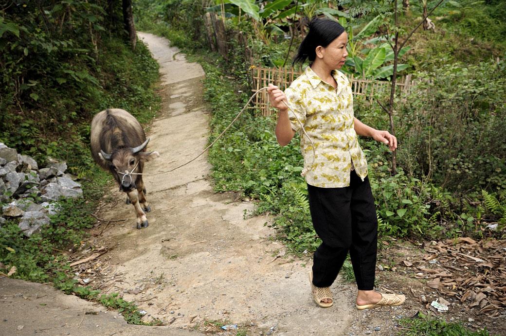 Femme et buffle dans un village Tay près de Hà Giang, Vietnam