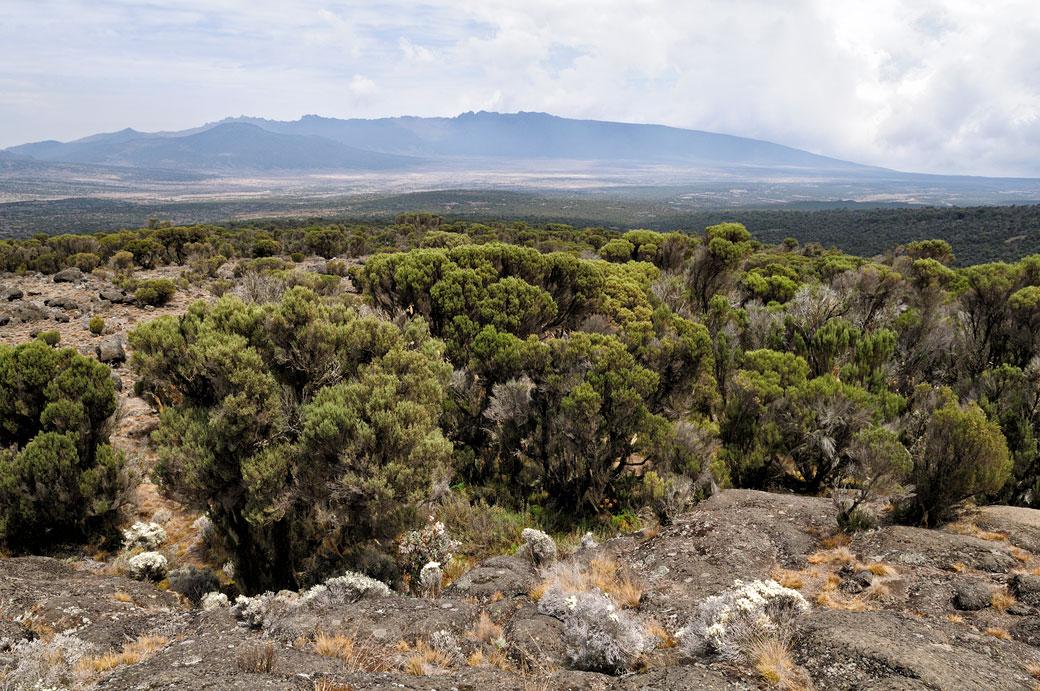 Vue sur le plateau de Shira au Kilimandjaro, Tanzanie
