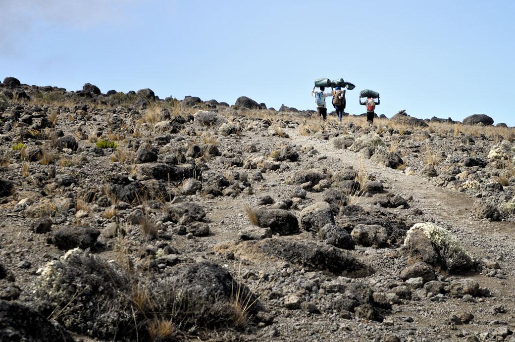 Trois porteurs en route pour Lava Tower Camp, Tanzanie