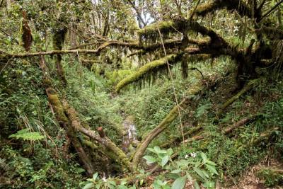 Forêt humide sur les pentes inférieures du Kilimandjaro, Tanzanie