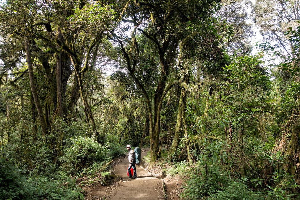 Godfrey dans la forêt humide lors de la descente par la voie Mweka, Tanzanie