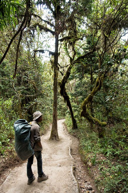 Godfrey dans la forêt lors de la descente de Mweka, Tanzanie