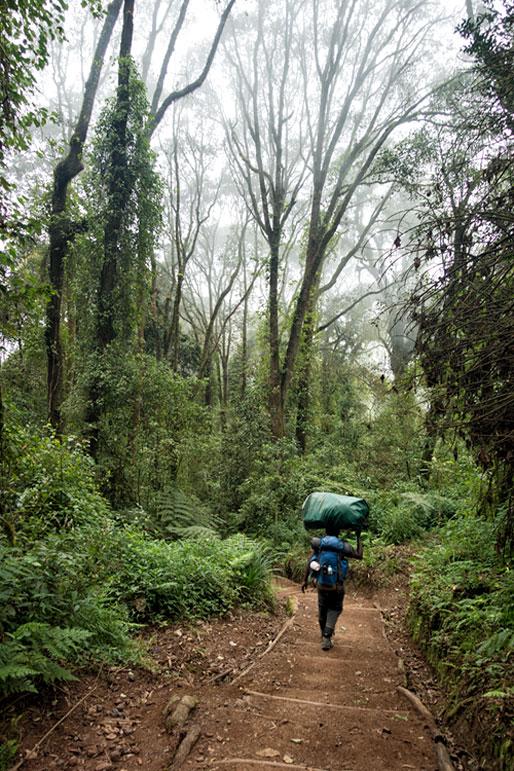 Porteur dans la forêt lors de la descente du Kilimandjaro, Tanzanie
