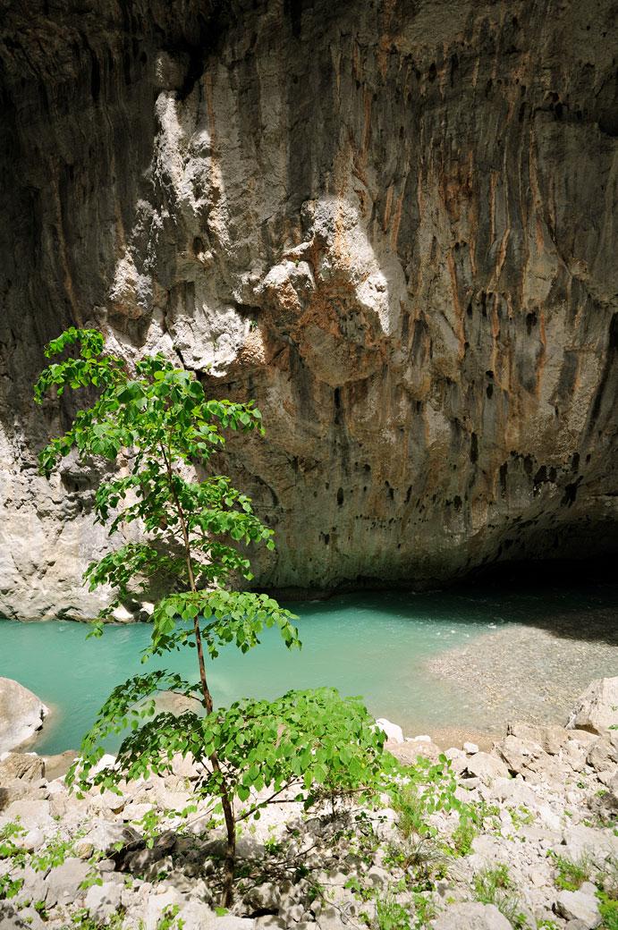 Arbre et falaise à l'étroit du Baou Béni dans les Gorges du Verdon
