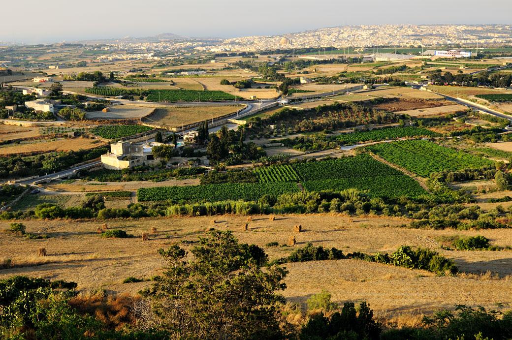 Panorama sur les cultures depuis Mdina, Malte