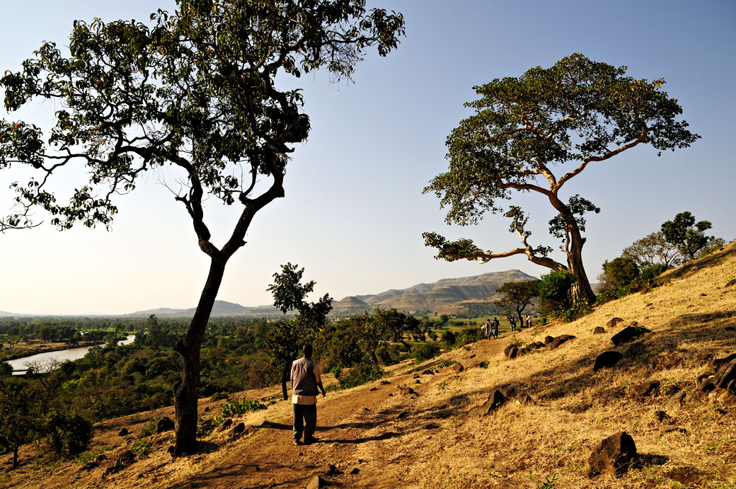 Arbres et sentier menant aux chutes du Nil bleu, Ethiopie