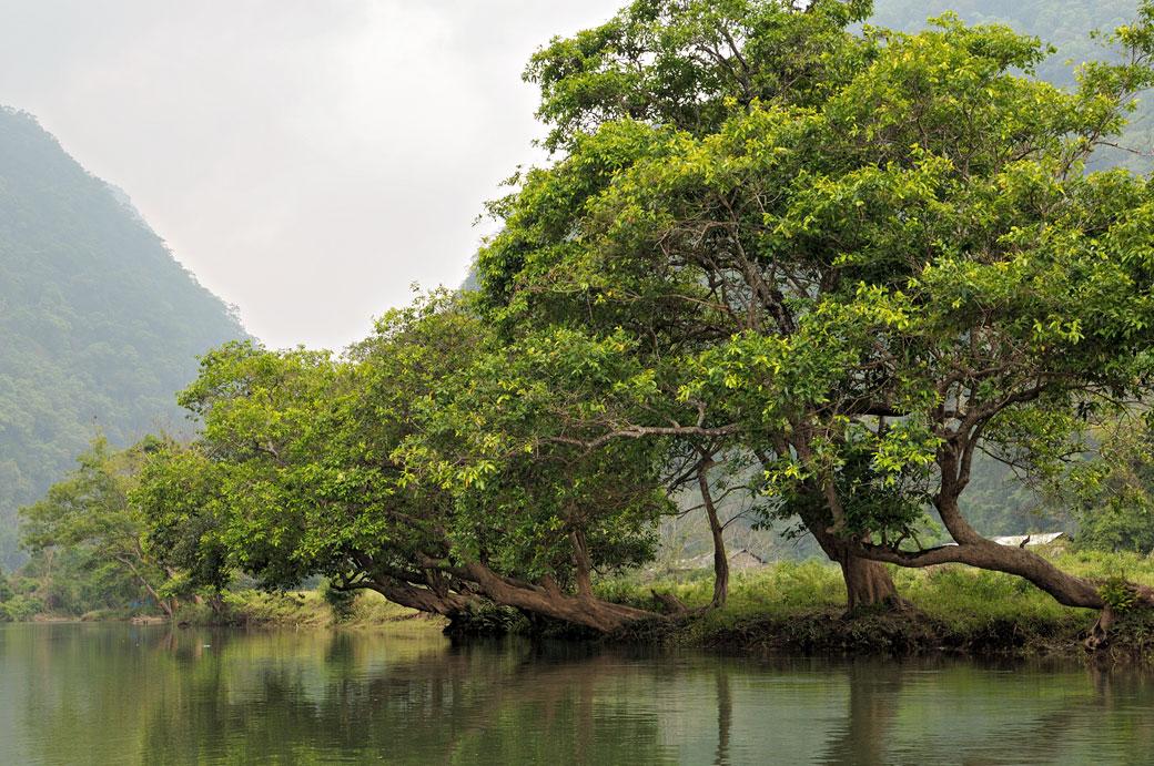 Arbres sur les berges du lac de Ba Be, Vietnam
