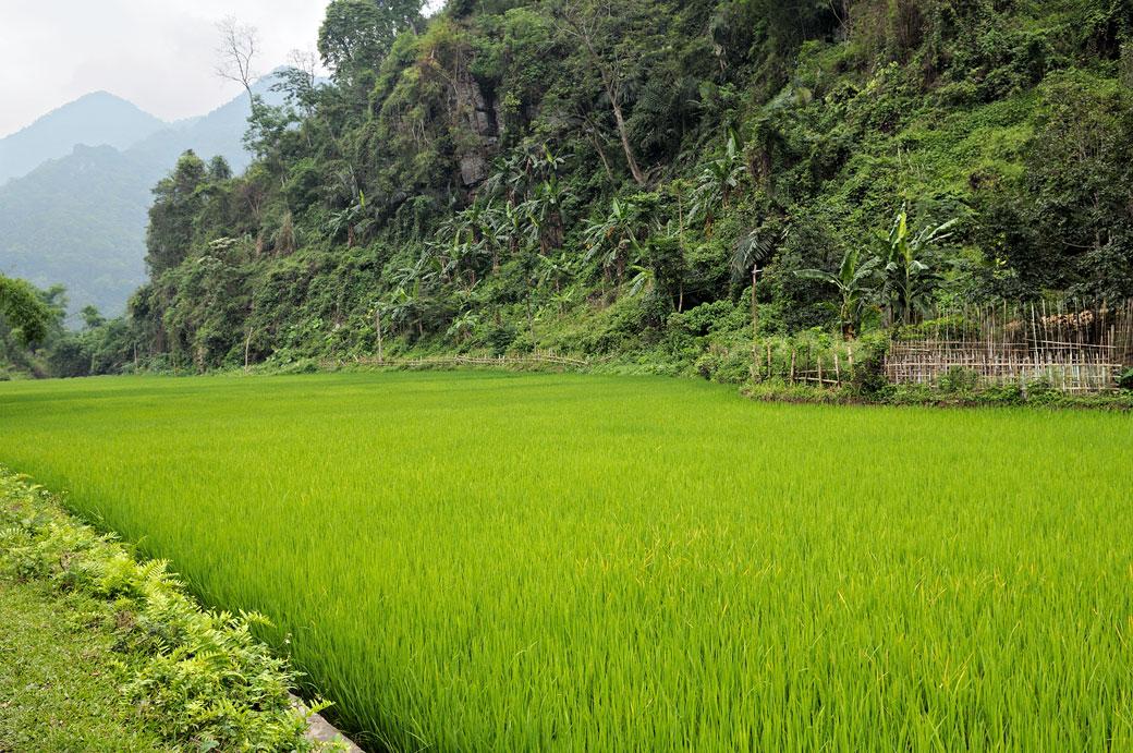 Rizière et montagnes dans le parc national de Ba Be, Vietnam