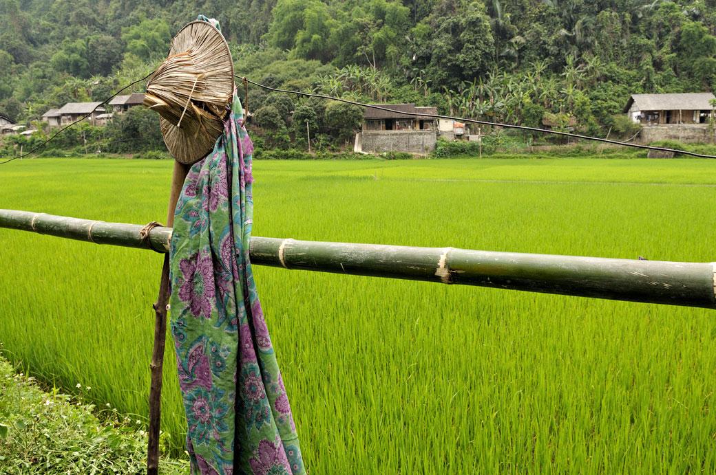 Chapeau et rizière dans le parc national de Ba Be, Vietnam