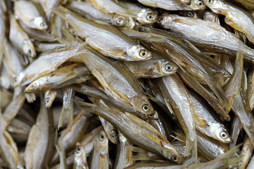 Petits poissons séchés du lac de Ba Be, Vietnam