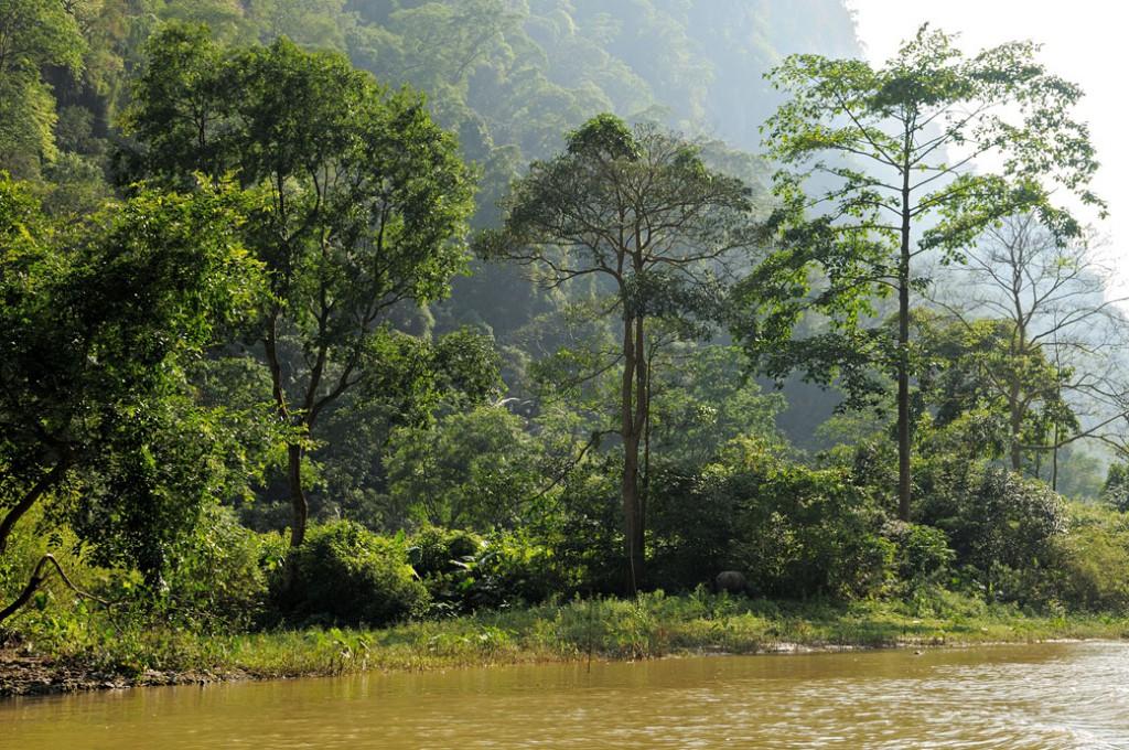 Arbres et rivière dans le parc national de Ba Be, Vietnam
