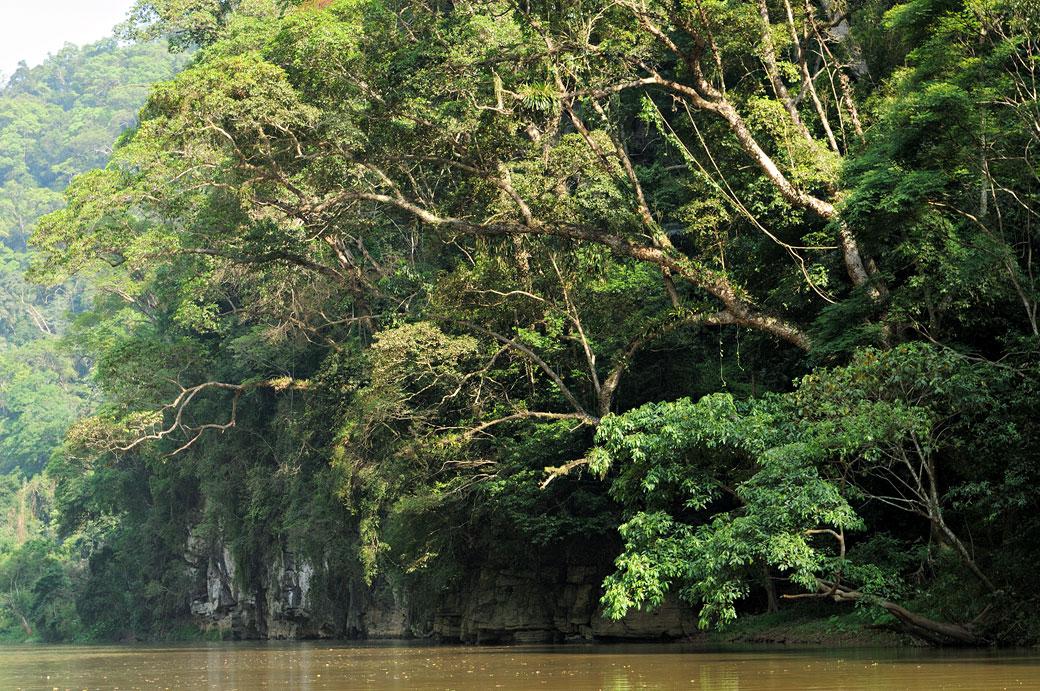 Forêt luxuriante sur les berges du lac de Ba Be, Vietnam