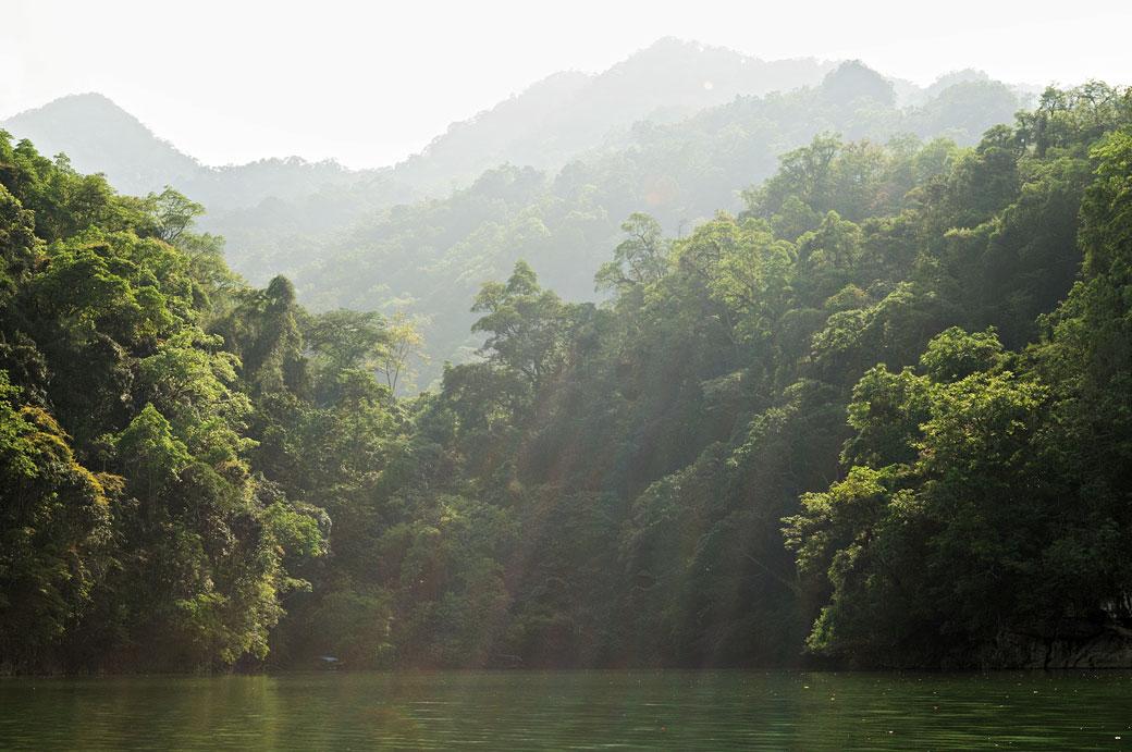Forêt dense sur les berges du lac de Ba Be, Vietnam