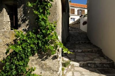 Vigne et ruelle de Primošten, Croatie