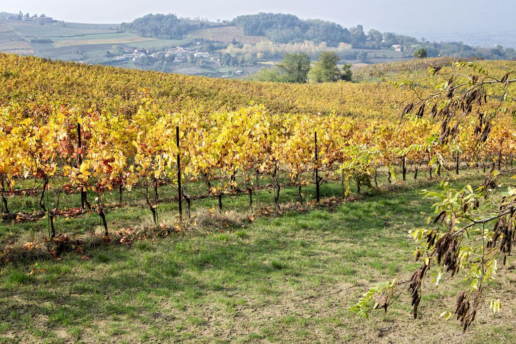 Vignes en automne dans l'Oltrpò pavese, Italie