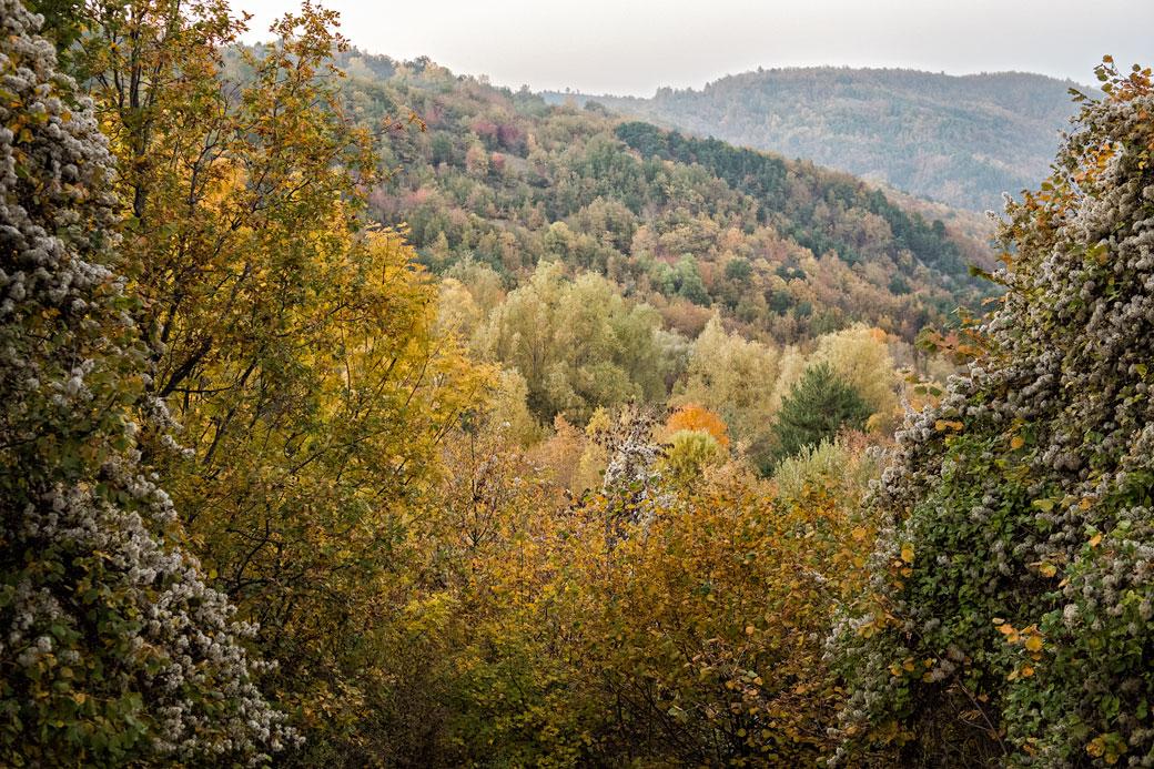 Forêt d'automne dans l'Oltrepò pavese en Lombardie, Italie