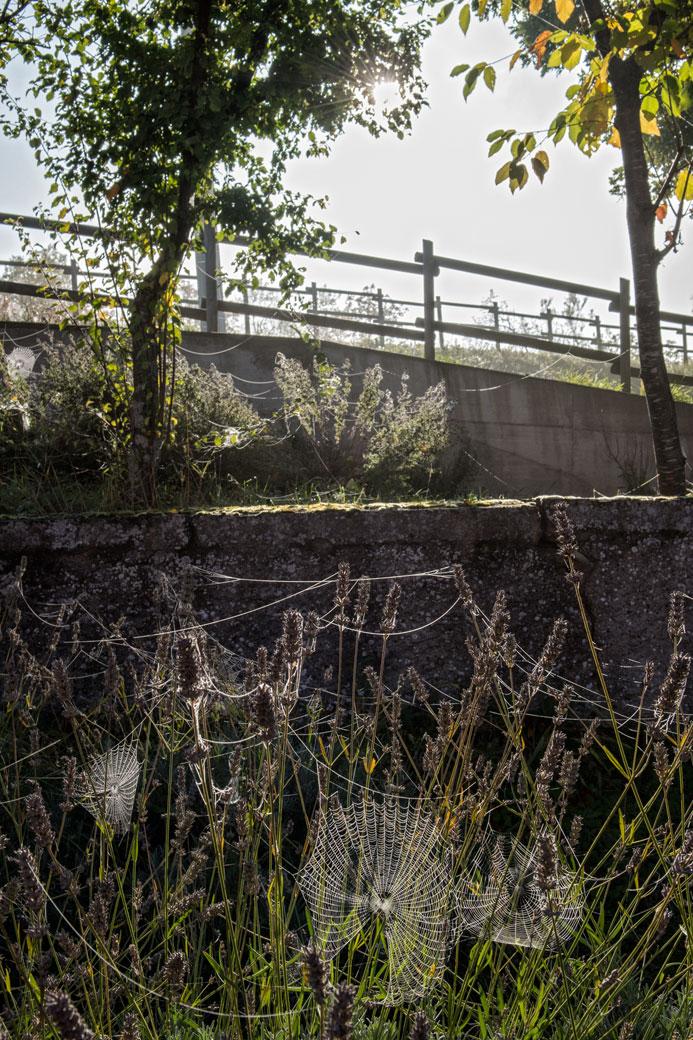 Toiles d'araignées et soleil matinal à Varzi, Italie