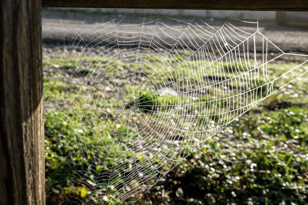 Toile d'araignée dans l'Oltrepò pavese en Lombardie, Italie