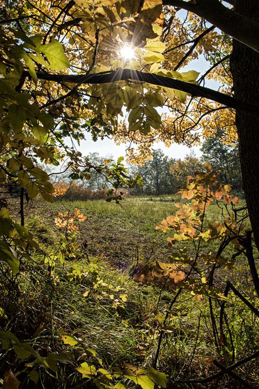 Soleil et arbres dans l'Oltrepò pavese en automne, Italie
