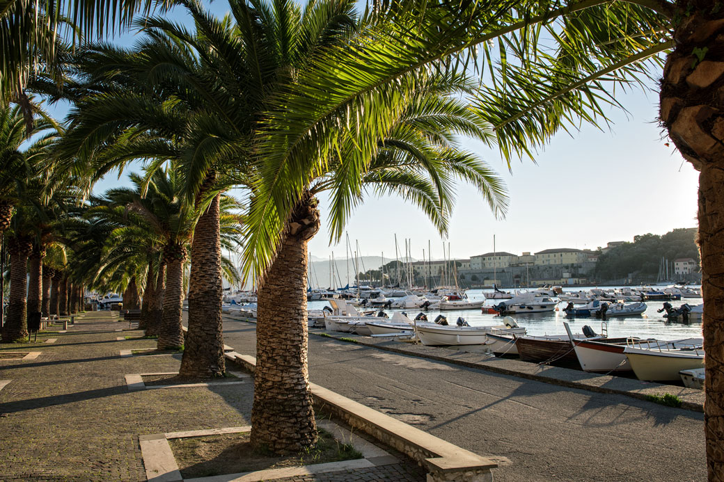 Palmiers au port de Le Grazie, Italie