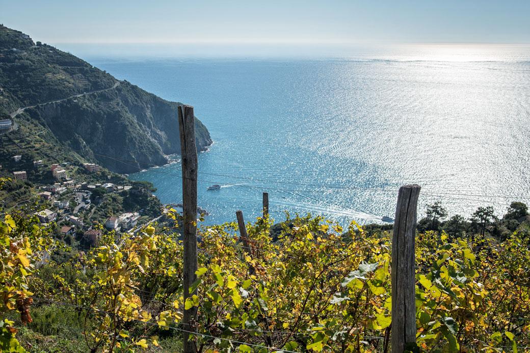 Vignoble au-dessus de Riomaggiore dans les Cinque Terre, Italie