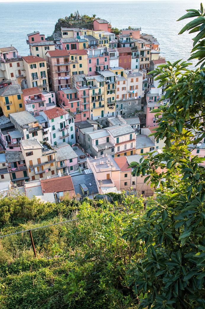 Verdure et maisons colorés de Manarola dans les Cinque Terre, Italie