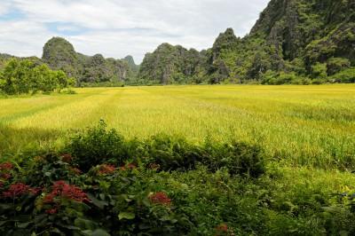 Rizière et montagnes karstiques à Tam Coc, Vietnam