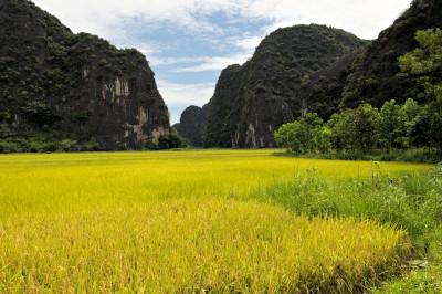 Rizière et montagnes à Tam Coc, Vietnam