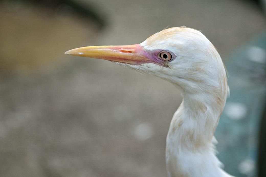 Gros plan d'un oiseau au Kuala Lumpur Bird Park, Malaisie