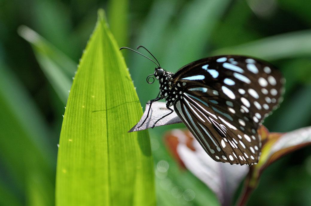 Papillon au Butterfly Park de Kuala Lumpur