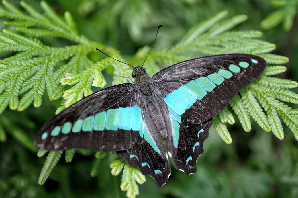 Papillon sur une branche au Butterfly Park de Kuala Lumpur