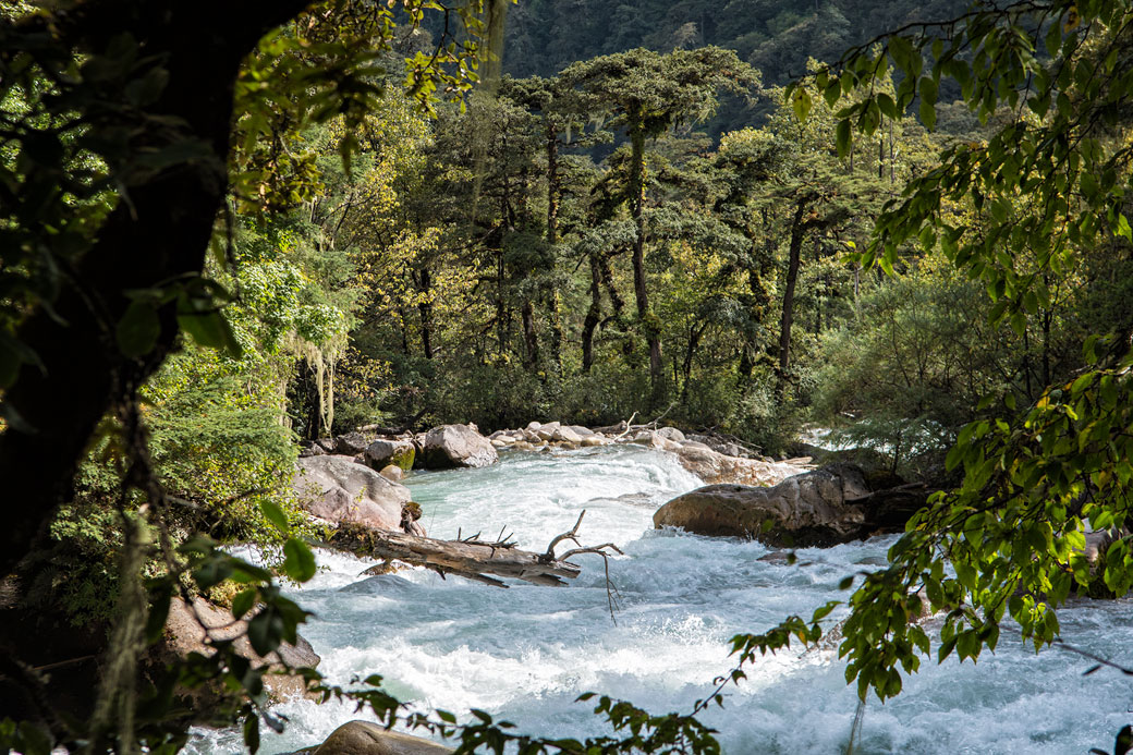 Rivière et forêt entre Shana et Thongo Zampa, Bhoutan