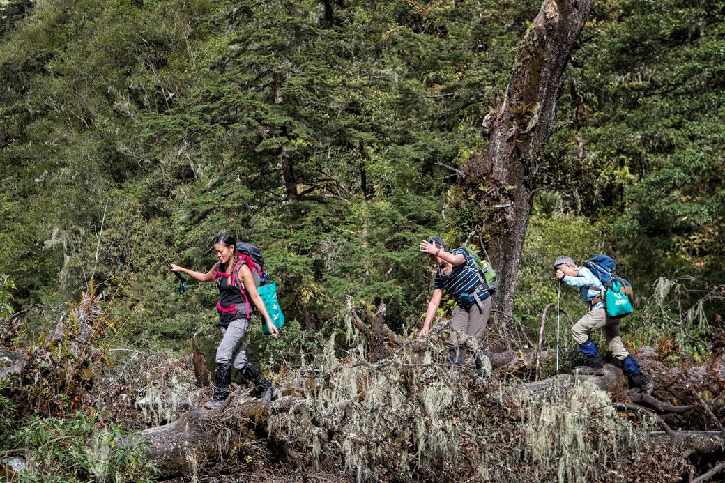 Trekkeuses sur un tronc d'arbre en route pour Thongo Zampa, Bhoutan
