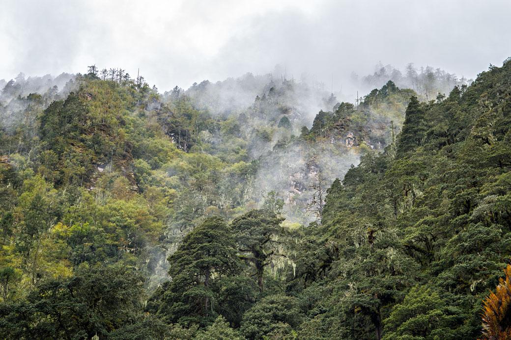 Forêt dense et nuages au camp de Thongo Zampa, Bhoutan