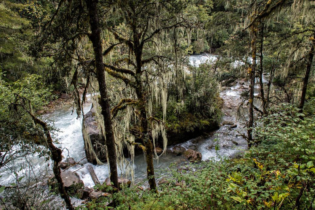 Forêt humide et rivière Paro Chhu, Bhoutan