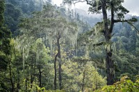 Forêt tropicale de montagne entre Thongo Zampa et Soi Thangthangkha, Bhoutan
