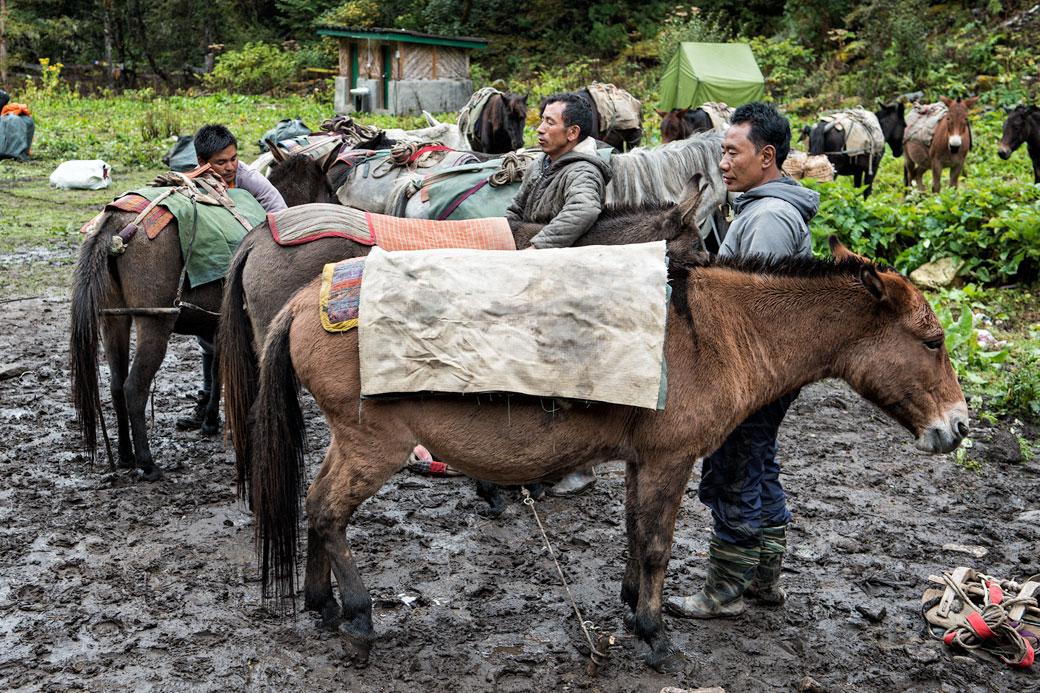 Préparation des chevaux et mulets au camp de Soi Thangthangkha, Bhoutan