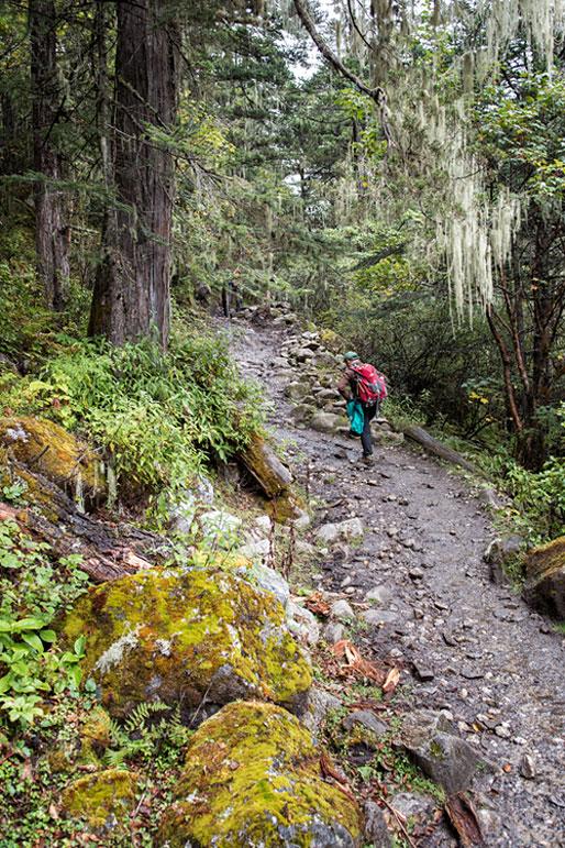 Sentier qui monte dans la forêt humide, Bhoutan