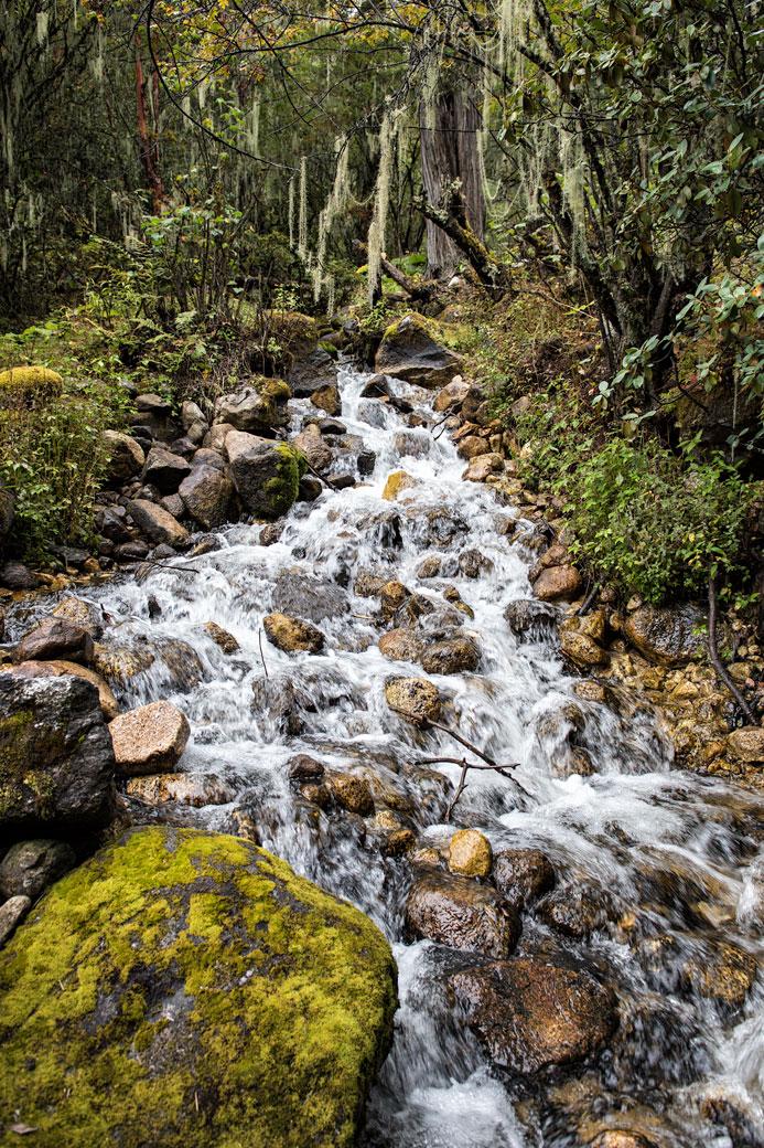 Ruisseau dans la forêt tropicale de montagne, Bhoutan