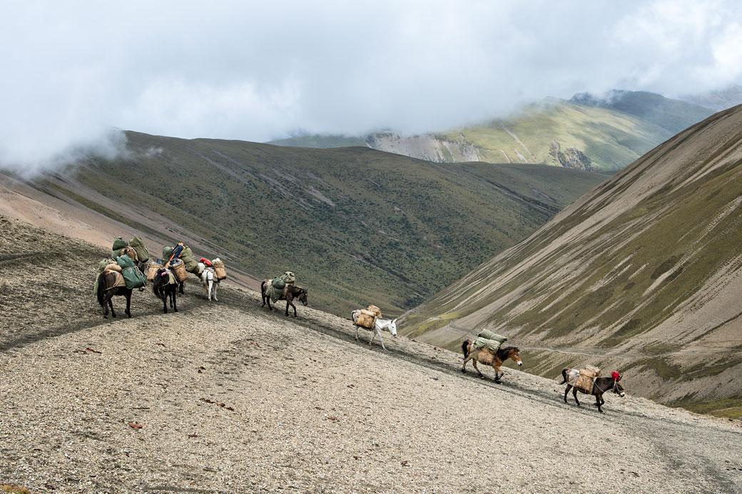 Chevaux qui redescendent le col de Nyile La, Bhoutan